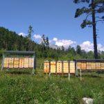 Vojenské lesy podporili včelárov