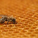 Včelí hlad je zlý