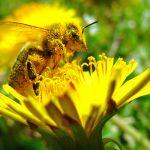 Bee Press Photo – prvá fotka zPoľska