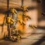 Súťaž Bee Press Photo 2021 sa rozbehla