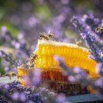 Bee Press Photo 2021 – víťazi